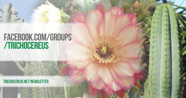 trichocereus-facebook-group-gruppe