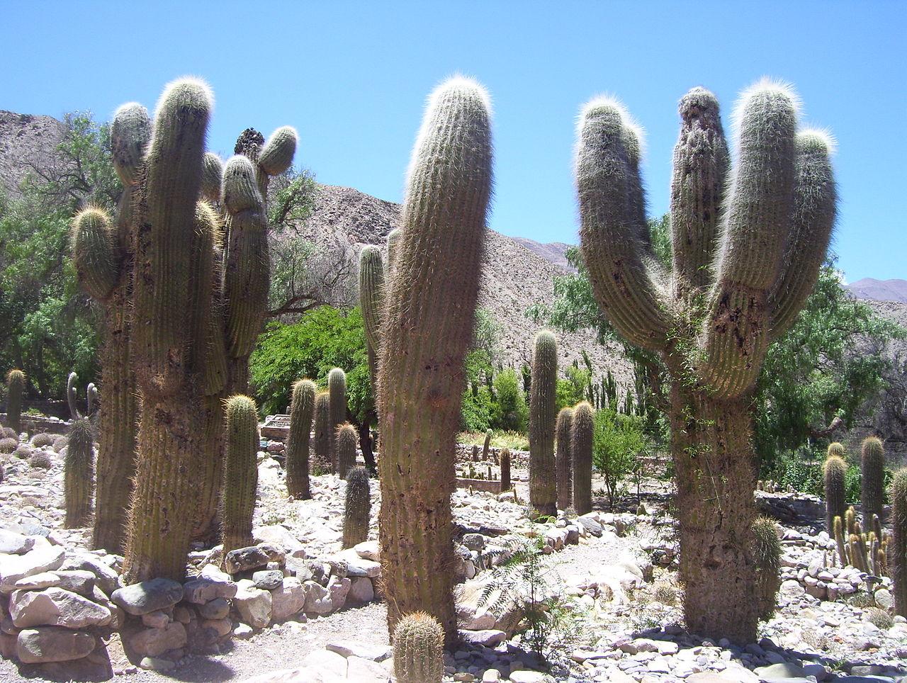 Evasaco Jardin_Botanico_de_Altura-Tilcara-Jujuy
