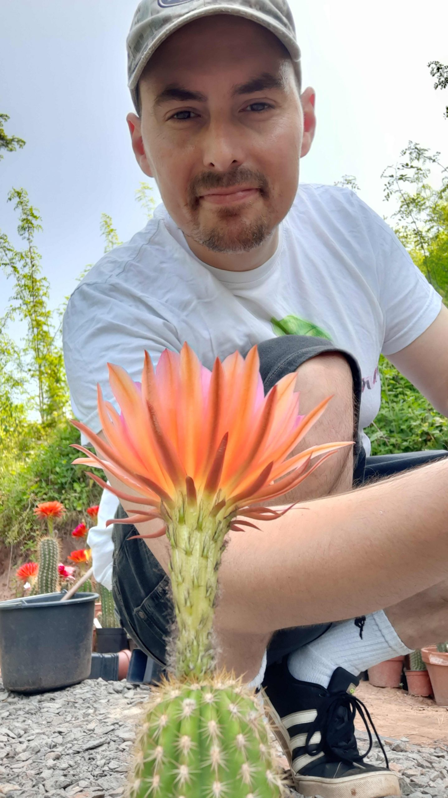 How to pollinate a cactus flower