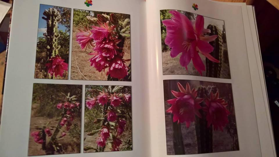 Trichocereus book Volume 1 Echinopsis books cactus books 2