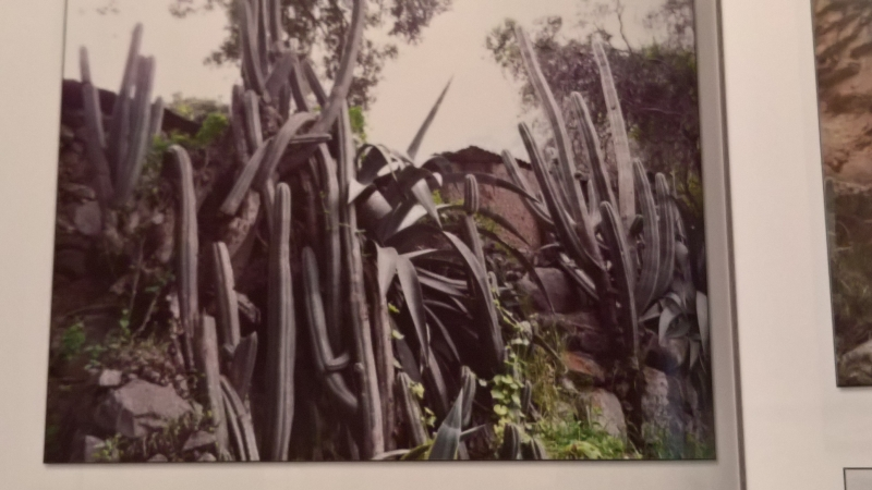 TRICHOCEREUS Book Vol. 1 Patrick Noll Buch Cactus Echinopsis 6