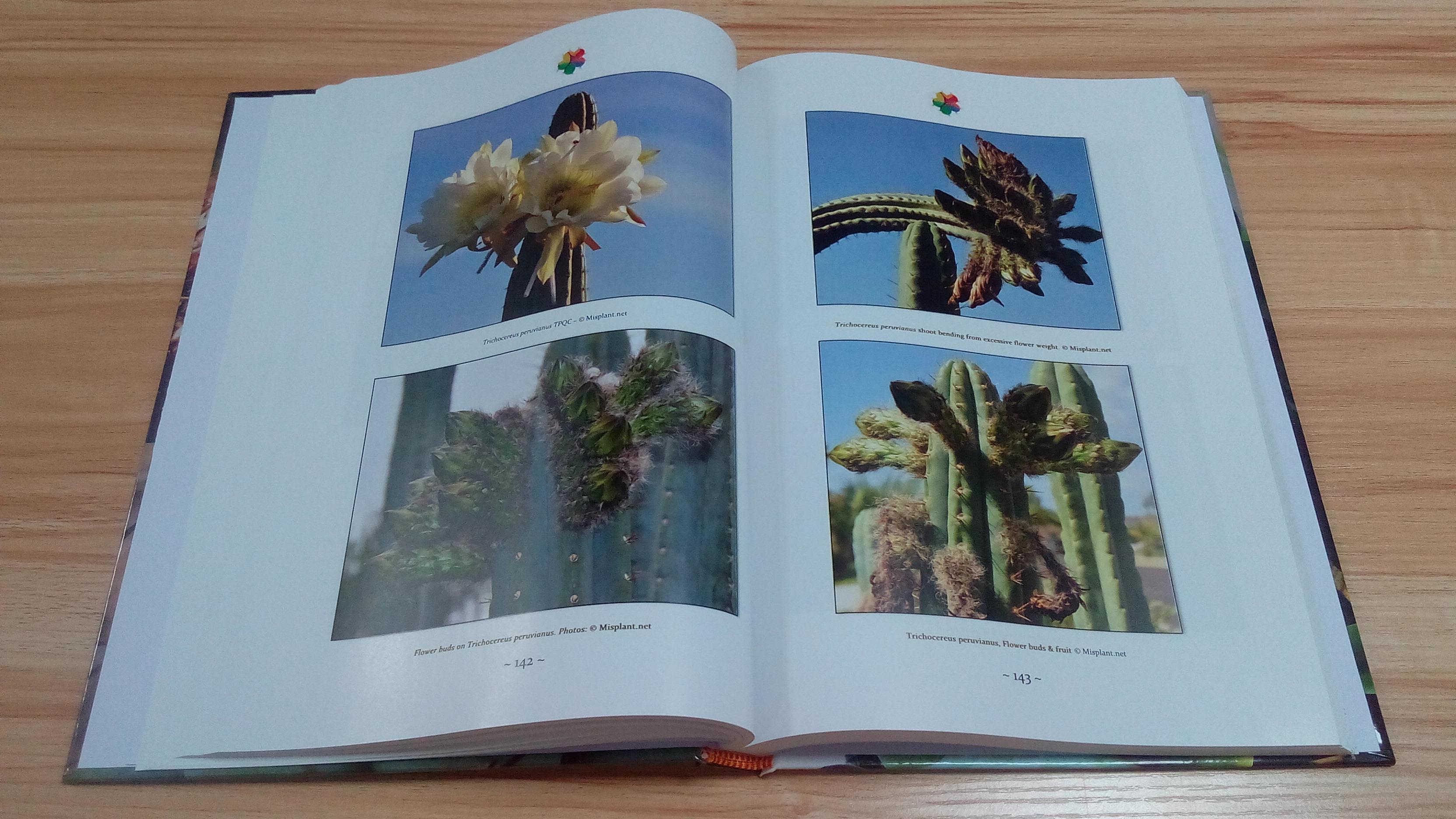 Trichocereus book Volume 1 Echinopsis cactus book 8