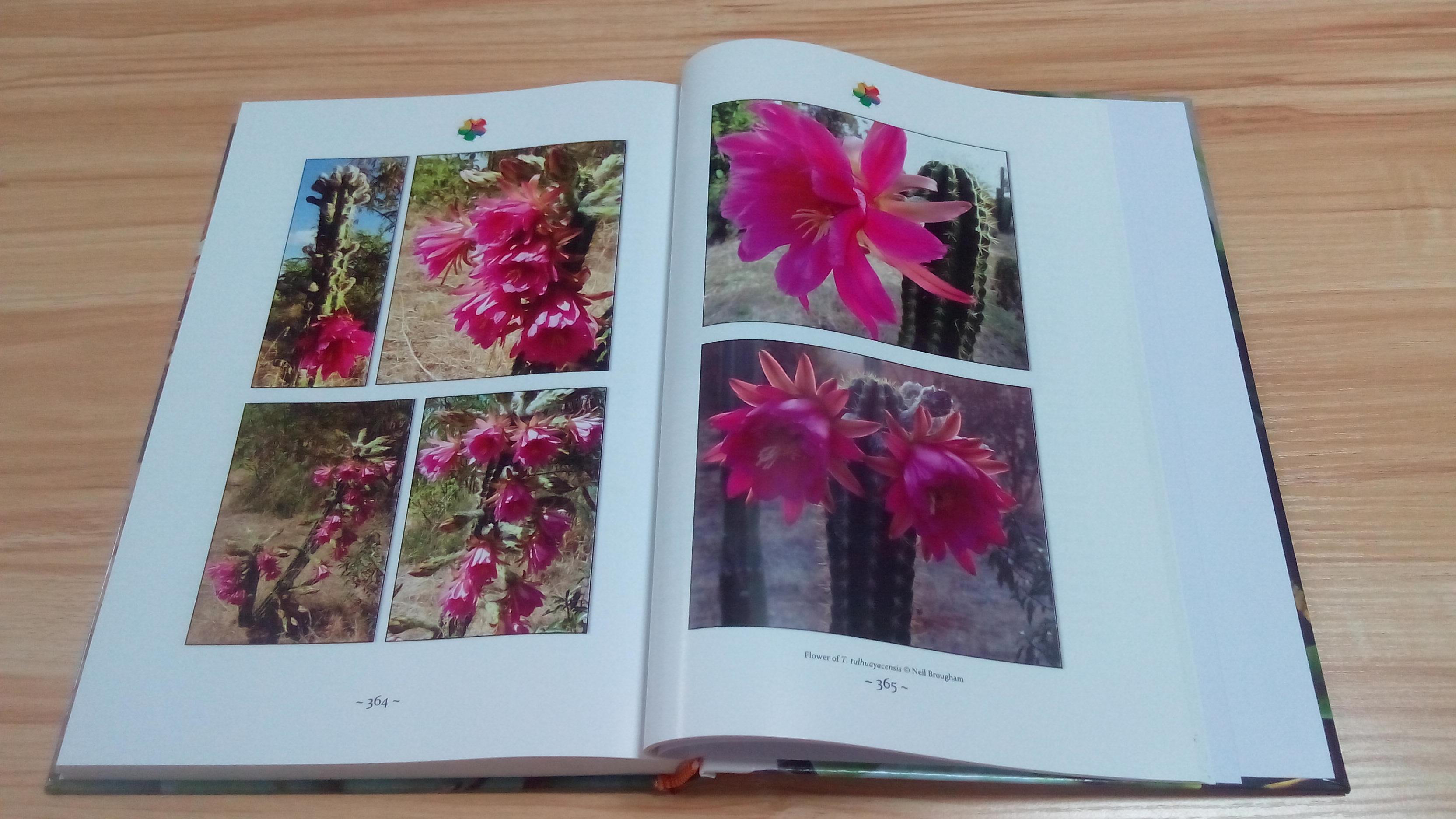 TRICHOCEREUS Book Vol. 1 Patrick Noll Buch Cactus Echinopsis 7