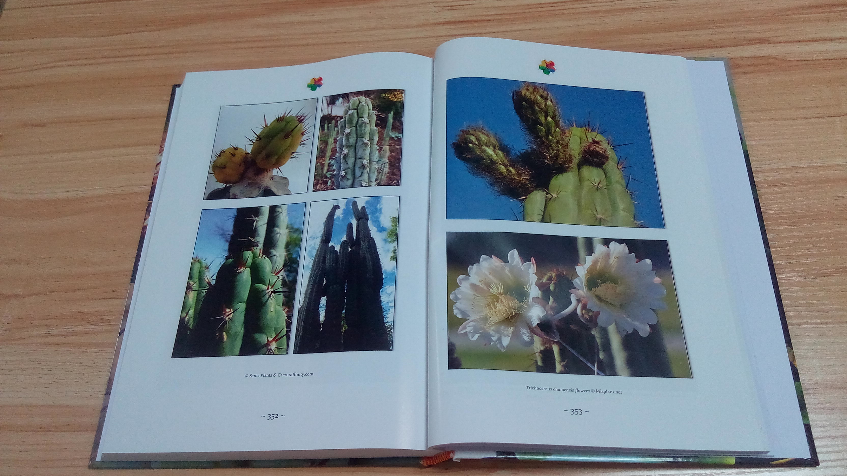 Trichocereus book Volume 1 Echinopsis cactus book 3