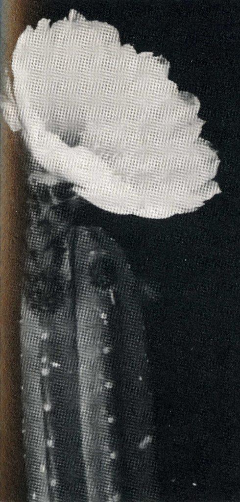 Trichocereus santaensis Friedrich Ritter Echinopsis santaensis