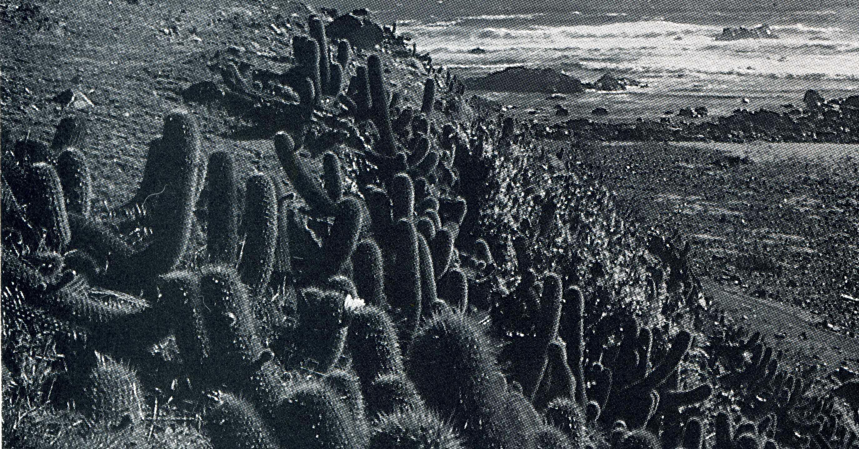 Trichocereus litoralis Echinopsis chiloensis ssp. litoralis 8