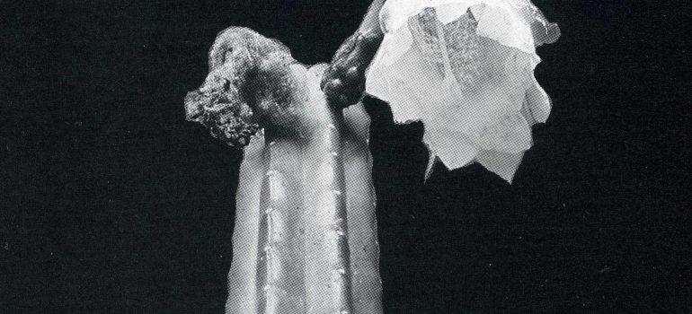 Trichocereus riomizquensis Ritter