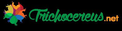Buy Trichocereus seeds Trichocereus.net-01-
