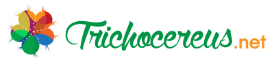 Buy Trichocereus seeds Echinopsis seed samen cactus cacti cactusseed