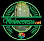 Trichocereus.net
