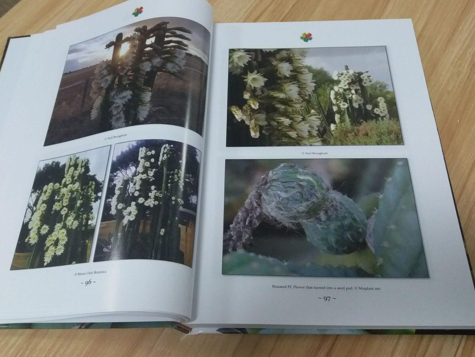TRICHOCEREUS Book Vol. 1 Patrick Noll Buch Cactus Echinopsis 8