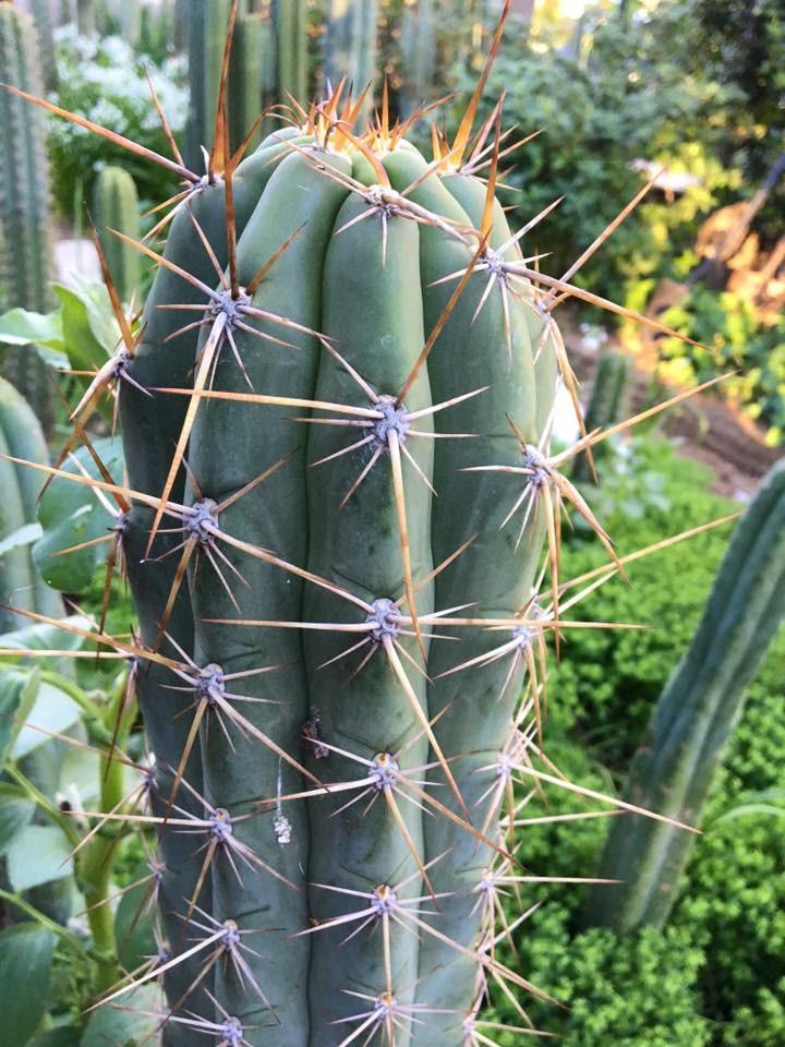 Cactus Affinity